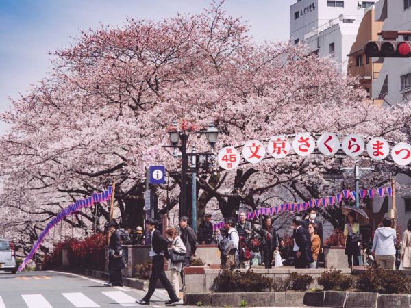 Cherry Festival 2020.Events Festivals In Japan Japanistry