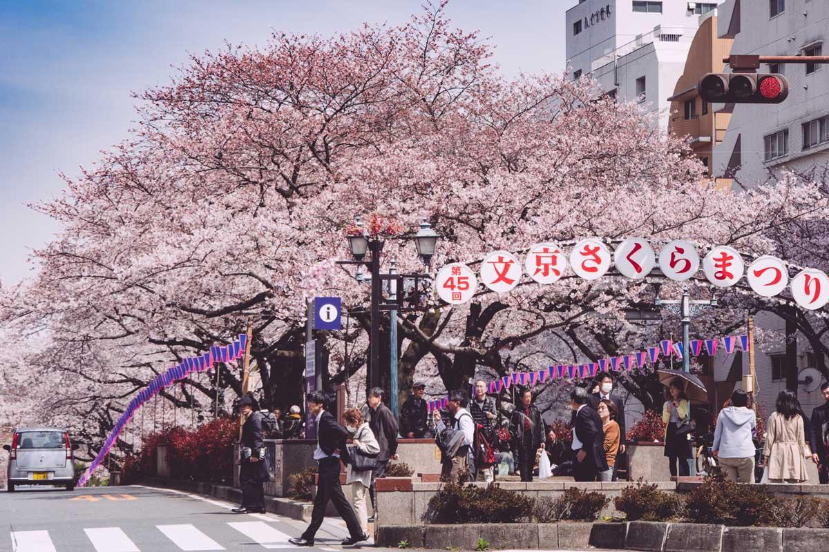"""Kết quả hình ảnh cho sakura matsuri 2019"""""""